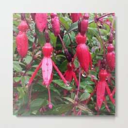 Fuchsia flower after rain Metal Print