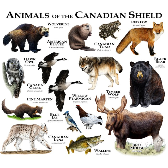 Animals of the Canadian Shield Duvet Cover