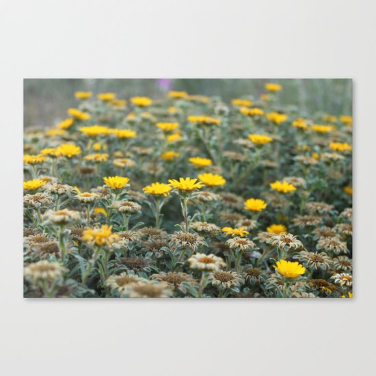 Scars Of Humanity Canvas Print