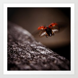 Ladybird in flight Art Print