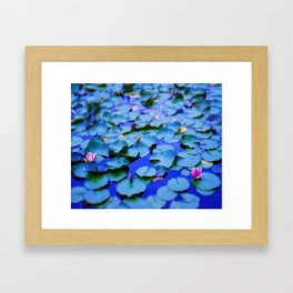 Water lilies in a pond Framed Art Print
