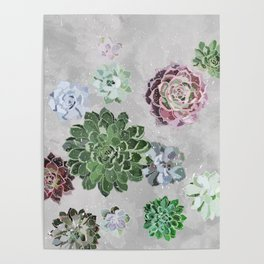 Simple succulents Poster