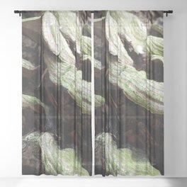 green Sheer Curtain