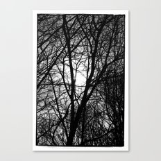 Norwegian forest IV Canvas Print