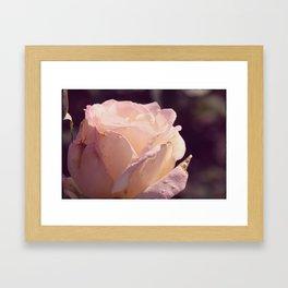 Soft Rose Framed Art Print