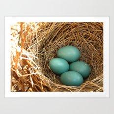 Four American Robin Eggs Art Print