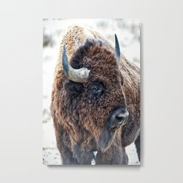 Bison the Mighty Beast Metal Print