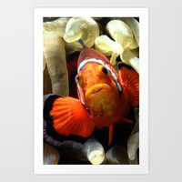 nemo Art Prints featuring Nemo  by RevatiN