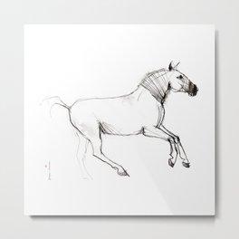 Horse (Lusitano Colt) Metal Print