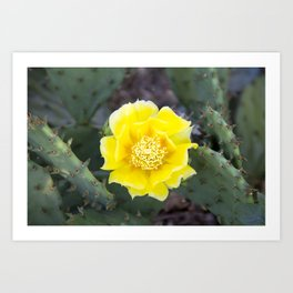 Yellow Cactus Flower 3 Art Print