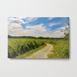 Image USA Morton Arboretum Northern Illinois Nature Sky Roads Fields Clouds Metal Print