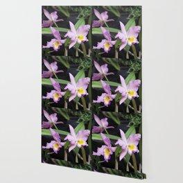 Cattleya Horace Maxima Orchid Wallpaper