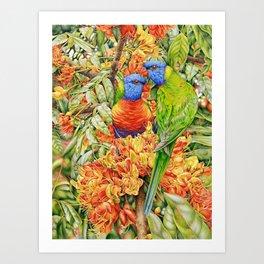 Rainbow Lorikeets and Black Bean Art Print