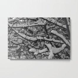 Milestone Photos Nature Metal Print