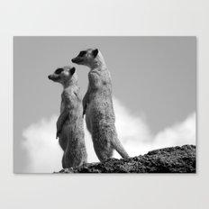 Meerkats, Fuerteventura. Canvas Print