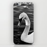 black swan iPhone & iPod Skins featuring Swan by Ana Pontes