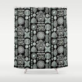 Ernst Haeckel - Scientific Illustration - Diatomea Shower Curtain