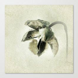 Coastal Cotton Tree - Hibiscus Canvas Print