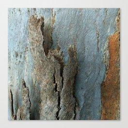 Eucalyptus Tree Bark and Wood Texture 17 Canvas Print