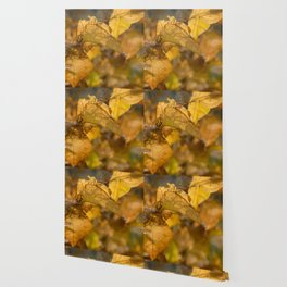 Autumn Colours Wallpaper