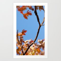 A taste of fall (part 2) Art Print
