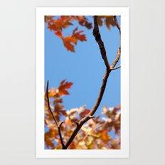 A taste of fall (part 2) Art Print
