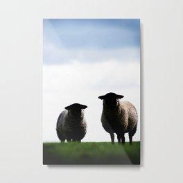 Welsh Sheep Staring Metal Print