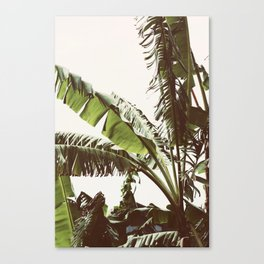 Tropical Winds Canvas Print