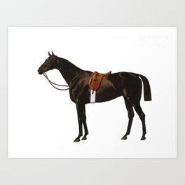 Vintage equestrian horse sketche decor Art Print