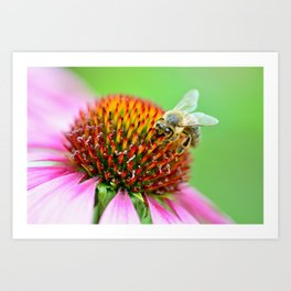 Bee on purple flower Art Print