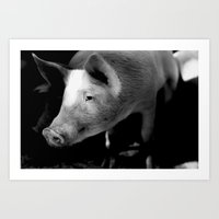 pigs Art Prints featuring Pigs by Michael Bou-Nacklie