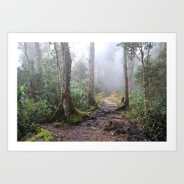 Lowlands of Cerro Chirripó, Costa Rica  Art Print
