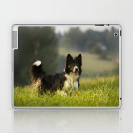 Border Collie In A Field Laptop & iPad Skin