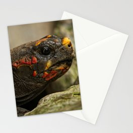 Red-Footed Tortoise Stationery Cards