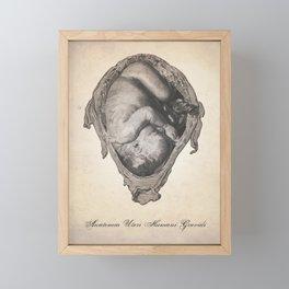 Fetus In Utero Human Anatomy Illustration Framed Mini Art Print