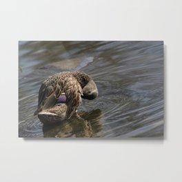 Duck sees you Metal Print