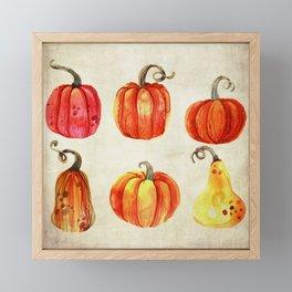 Autumn Gourds - Pumpkin Watercolor on Antique White Framed Mini Art Print