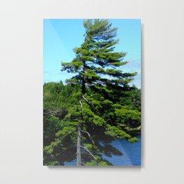 Muskoka Pine Metal Print