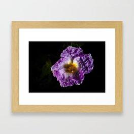 Fragile Flower Framed Art Print