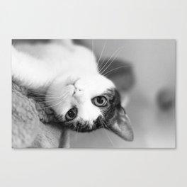 Upside down cat Canvas Print