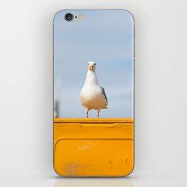 Sea gull iPhone Skin