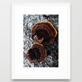 tree fungus Framed Art Print