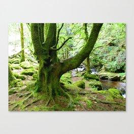 Torc Tree Canvas Print