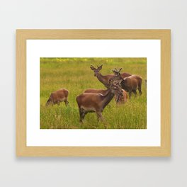 Red Deer Framed Art Print