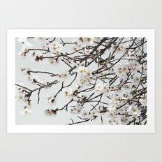 Emerging Spring Art Print