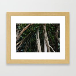 Banyan tree canopy Framed Art Print