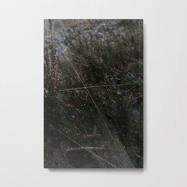 Ice in the frost garden Metal Print