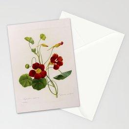 Nasturtium Tropaeolum Majus Stationery Cards