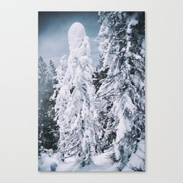 Back to the Snowy Forest Canvas Print
