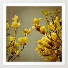 magnolias yellow Art Print